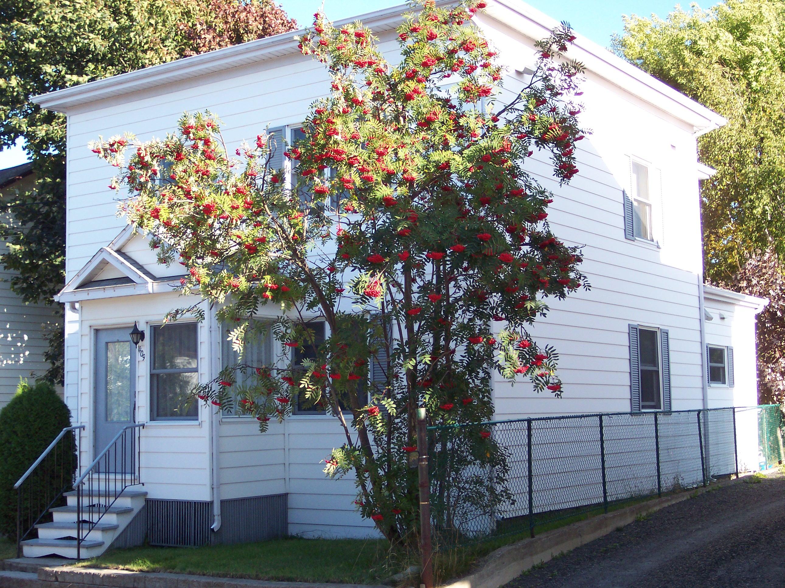 1746 - 407-409, rue La Salle